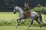 19 05 TRAININGSTURNIER WORKING EQUITATION FEHLING, 25.AUGUST 2019
